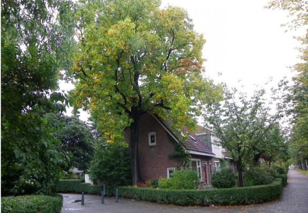Boomrijke situatie hoek Groenezoom - Frankendaal, in Vreewijk. foto: Bleeker en Nauta landschaparchitecten