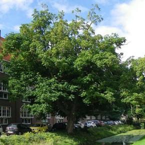 Bomenplan voor Vreewijk
